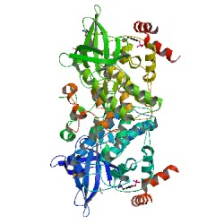 Human Glycogen synthase kinase-3 beta , GSK3B ELISA Kit